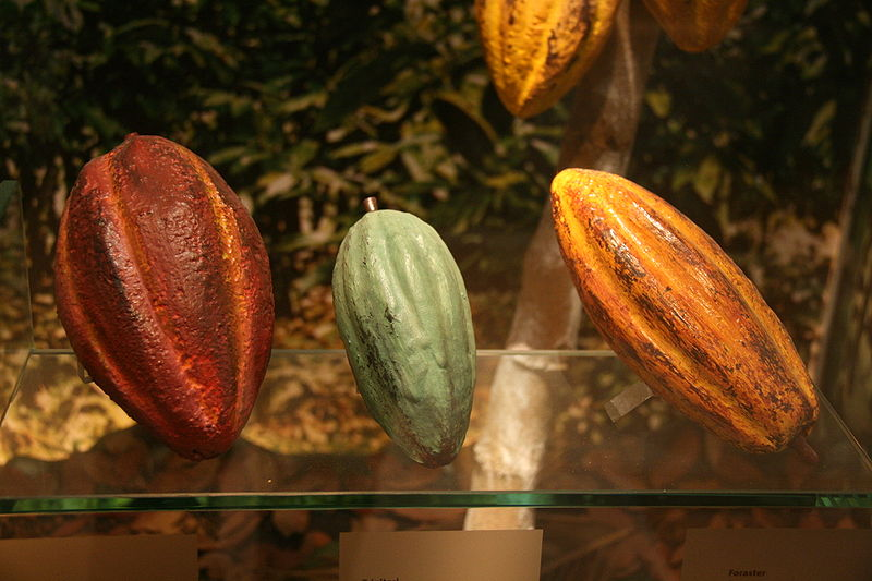 Taiwan Is Growing Cocoa? Tree to Bar Chocolate All-In-One on Formosa Island